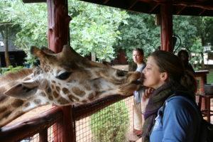 Kiss a Giraffe - Included