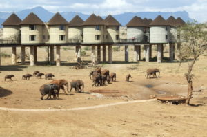 Salt Lick Tsavo West