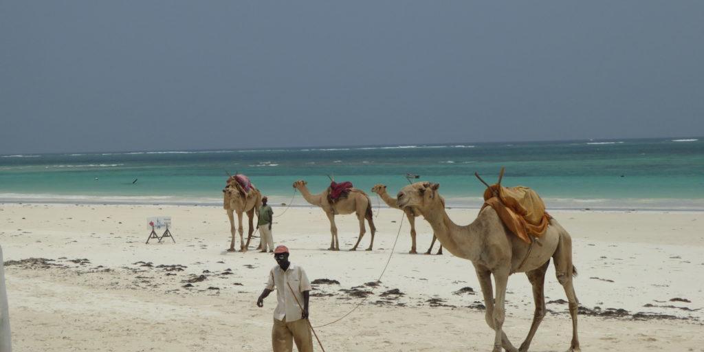 Diani Beach Camels