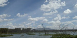 Lake Naivasha Area
