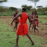 Experience Maasai culture in Kenya. Maasai man in red shukas is about to throw a long speer. Other warriors watch him in the background.